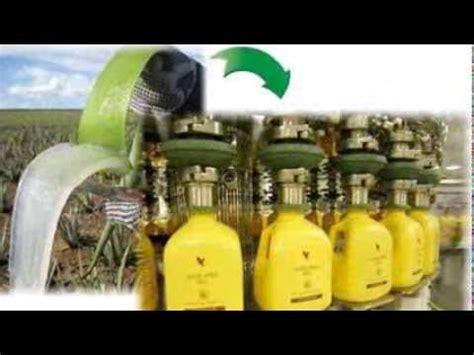 Aloe Vera Gel Untuk Detox by Aloe Vera Gel Detox Test