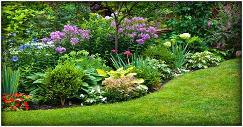 lawn care service mn yard maintenance landscape tree