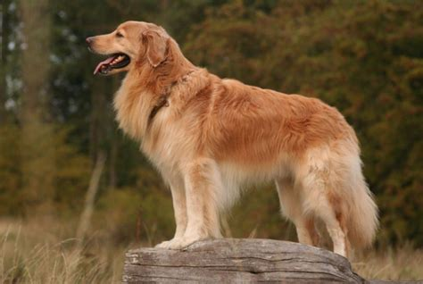 all kinds of dogs all list of different dogs breeds different types of dogs