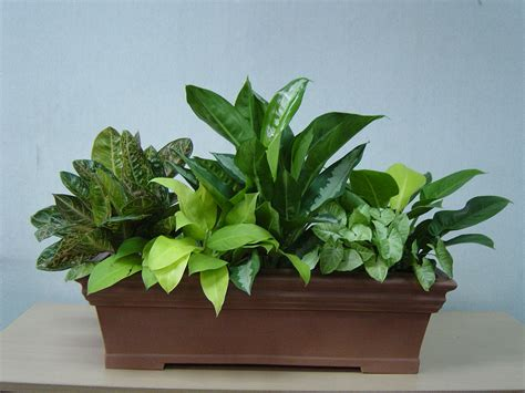 mixed plants in rectangular pot groen gardens landscapes sdn bhd