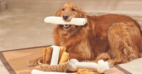 rawhide treats dangerous treats what to before you treat your pet