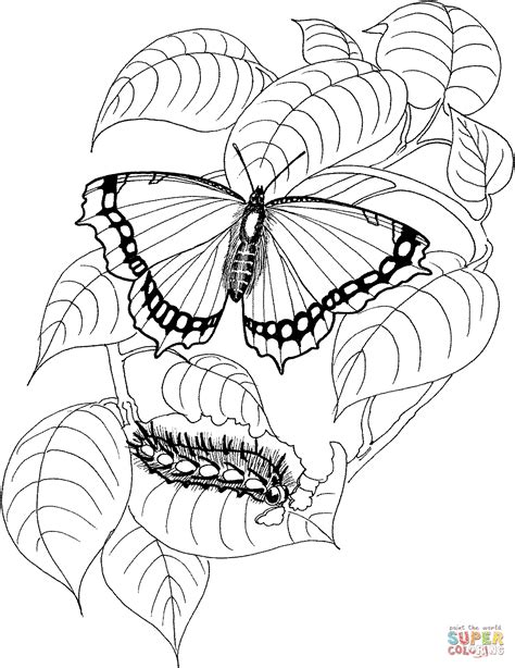 Caterpillar Butterfly Coloring Page Pretmic Com | caterpillar and butterfly 4 coloring page free printable