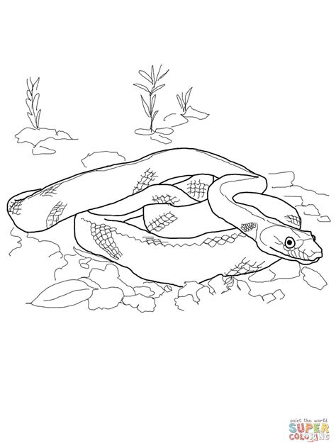 coral snake coloring page coral snake coloring page thekindproject