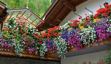 fiori terrazzo fiori da balcone pendenti 3 piante a cascata facili da