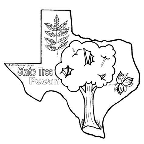 coloring page pecan tree pecan tree colouring p picture to pin on pinterest thepinsta