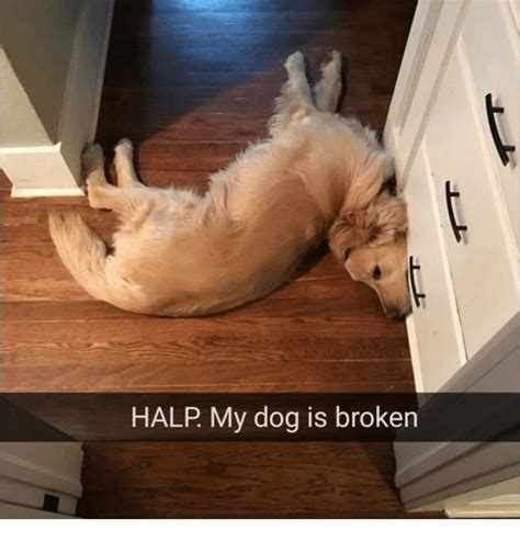 how is my puppy halp my is broken meme on me me