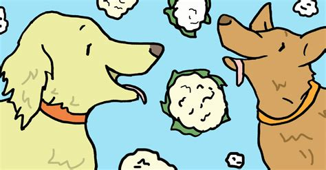 cauliflower for dogs can dogs eat cauliflower