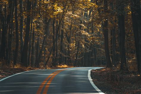 road in forest stock photo image of darkness mist free images landscape tree nature forest snow