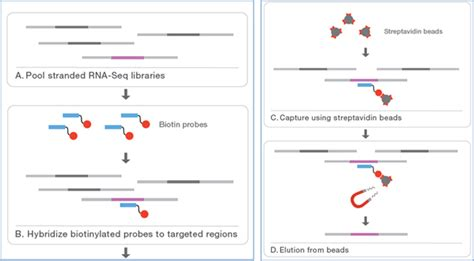 rna sequencing illumina targeted rna sequencing focus on specific transcripts of
