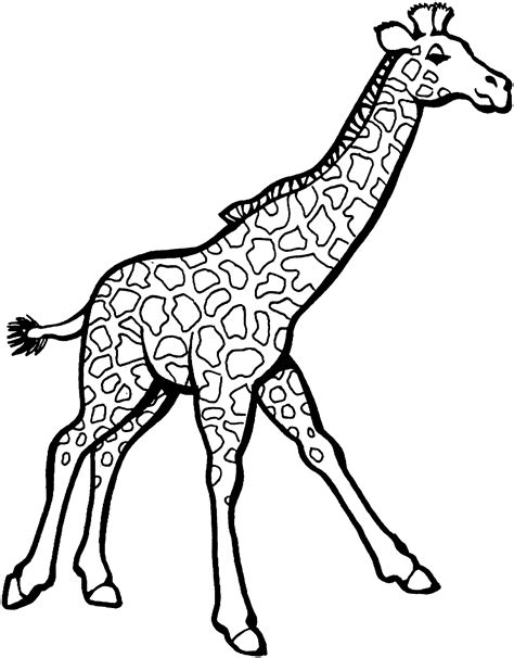 Free Printable Giraffe Coloring Pages For Kids Coloring Pages Giraffe