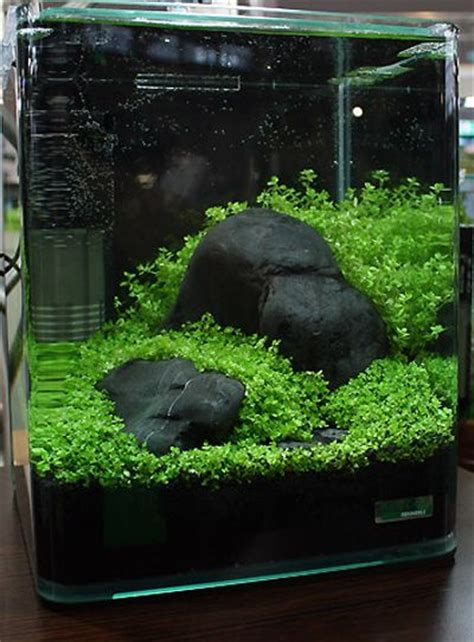 Small Tank Aquascaping by 167 Best Planted Nano Aquariums Images On
