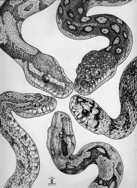 pigmentation pattern formation on snakes the 25 best snake ideas on pinterest snakes beautiful