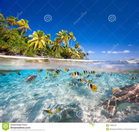 Tropical L by Tropical Island Stock Image Image Of Island Getaway