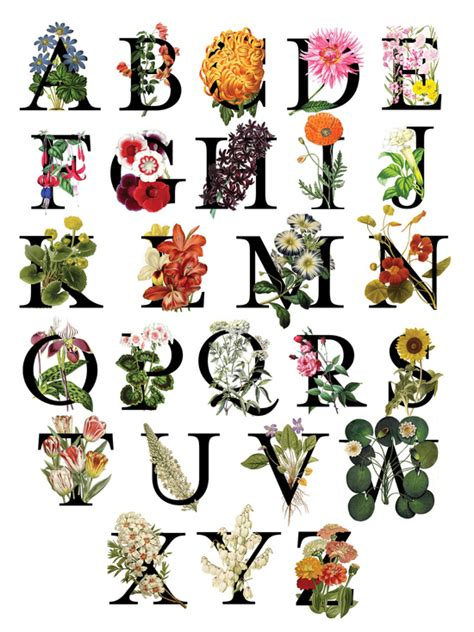printable letters with flowers floral alphabet art print by anna dooley society6