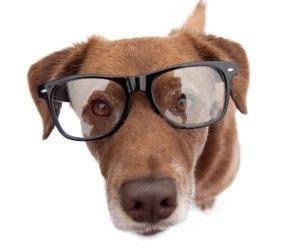 where can i get my puppy can i get my eyeglasses eye wear options for pet dogs