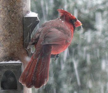 10 best images about birds in the garden on pinterest