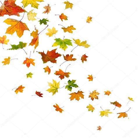 si鑒e des ノmotions maple folhas caindo fotografias de stock 169 sserg dibrova
