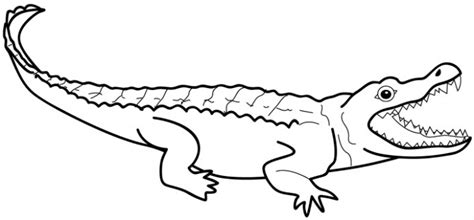 template of crocodile printable alligator coloring page for kidz coloring point