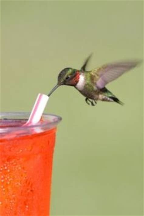 hummingbirds on pinterest birds animals and pets and
