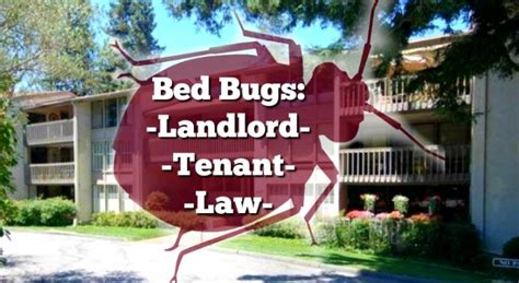 important bed bug law  california landlords  tenants