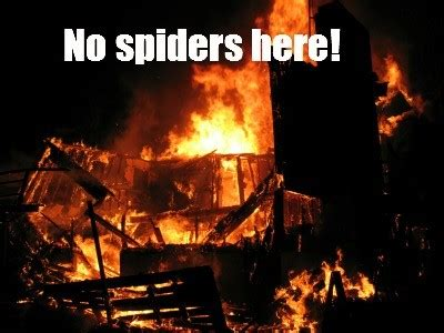rid  spiders naturally