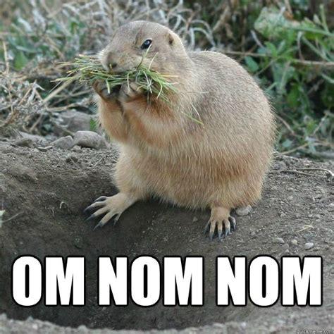 Nom Nom Nom Meme - image gallery nom nom nom meme