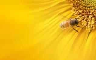 Free bee wallpaper free best bee windows background free desktop