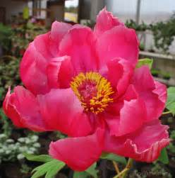 japanese flower by pinkpanda92 on deviantart