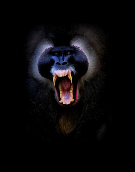 26 photos of beautiful yawning animals to put you to sleep
