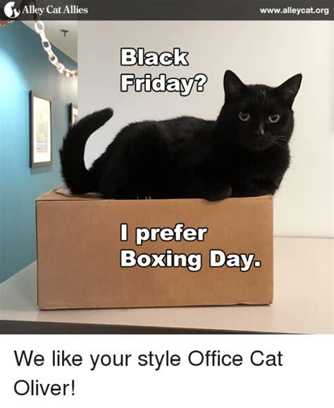 Office Cat Meme - 25 best memes about office office memes
