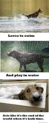 Dog Logic Meme - dog logic when it comes to water meme weknowmemes