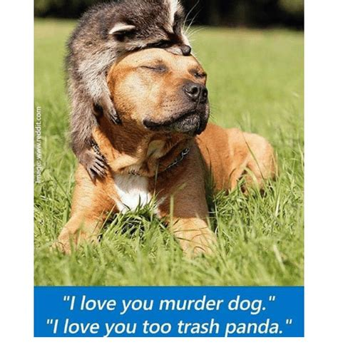 puppy i you i you murder i you trash panda dogs meme on sizzle