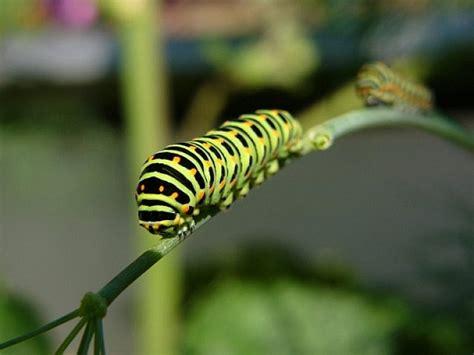 Raupen Im Garten Was Tun schattenblick garten 190 kr 228 uter im garten tun nicht