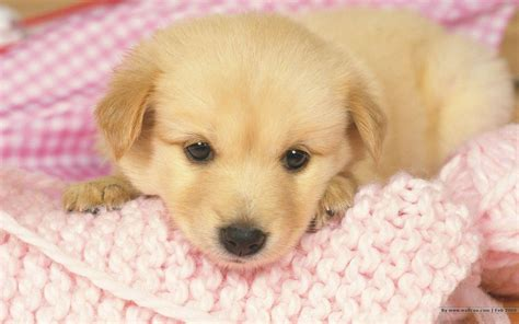 dog wallpaper high quality puppies 10487 wallpaper walldiskpaper puppy wallpapers free wallpaper cave