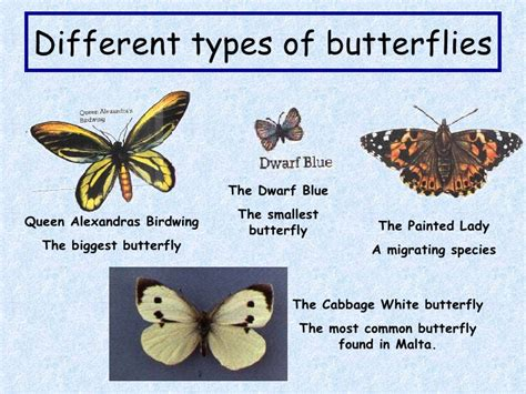 Names Of Different Types Of Individual By African | names of different types of individual by african butterflies
