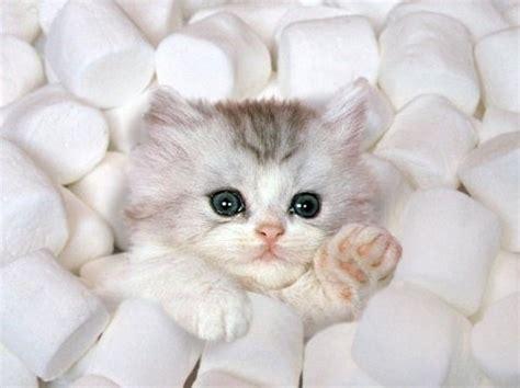 i love cats cute cat kitten pictures cute cat cat cute funny love white image 105594 on favim com