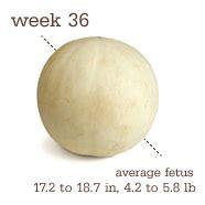fruit 36 weeks friday s fruit week 36 of pregnancy finding silver linings