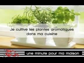 des plantes aromatiques dans ma cuisine