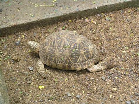Snake Garden Katraj Katraj Snake Park Most Popular Conservation Park