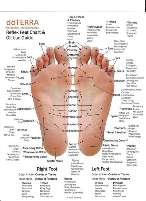acupressure diagram of pressure points 93 best images about reflexolog 205 a on