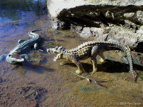 Kaprosuchus VS Crocodile by Carnosaur on DeviantArt