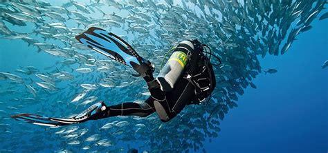 le dive scuba diving