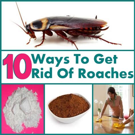 how to get rid of roaches in the kitchen 10 ways to simply get rid of roaches diy home things