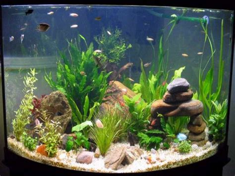 How To Decorate A Fish Tank by How To Decorate Your Boring Fish Tank Fish Tank