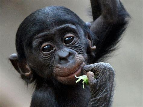Nov. 27 Daily Brief: Troubled turkey, baby bonobo, Taylor ...