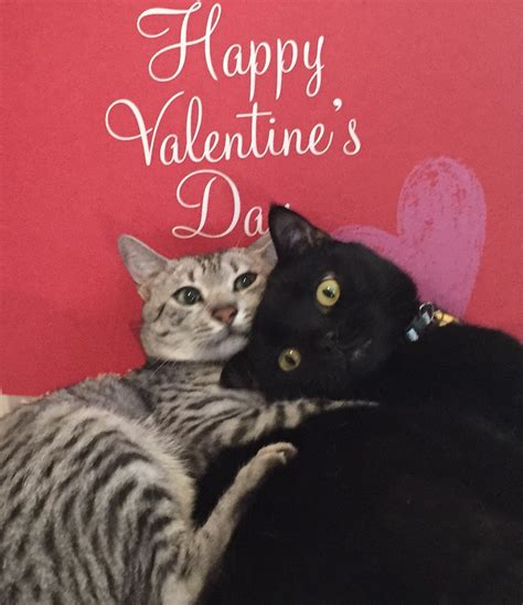And A Merry Valentines Day To All Cat Authors