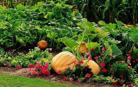 gardening picture pumpkin garden pictures png hi res 720p hd