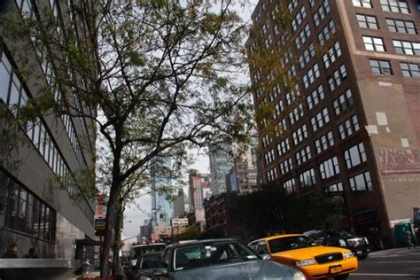 city tree the high cost of carbon in city trees 187 scienceline