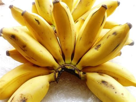 Sweet Banana 10 trees and shrubs you can find in that actually
