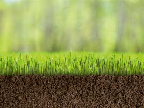 concimazione tappeto erboso ciarrocchi primo fertilizzanti vigorprato per tappeti